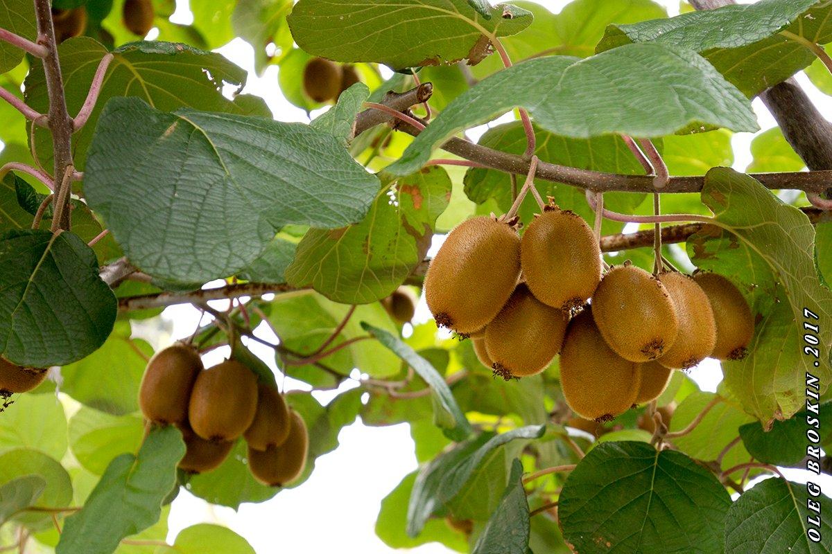 meyve bahceleri icin destek nereden alinir