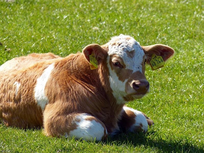 hayvancilik destegi icin basvuru sartlari
